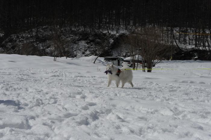 雪中キャンプ in一色の森キャンプ場 2_a0049296_18343863.jpg