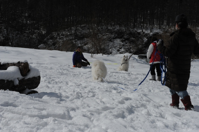 雪中キャンプ in一色の森キャンプ場 2_a0049296_18350463.jpg