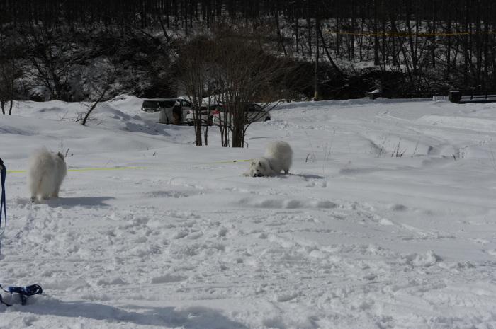雪中キャンプ in一色の森キャンプ場 2_a0049296_18351610.jpg