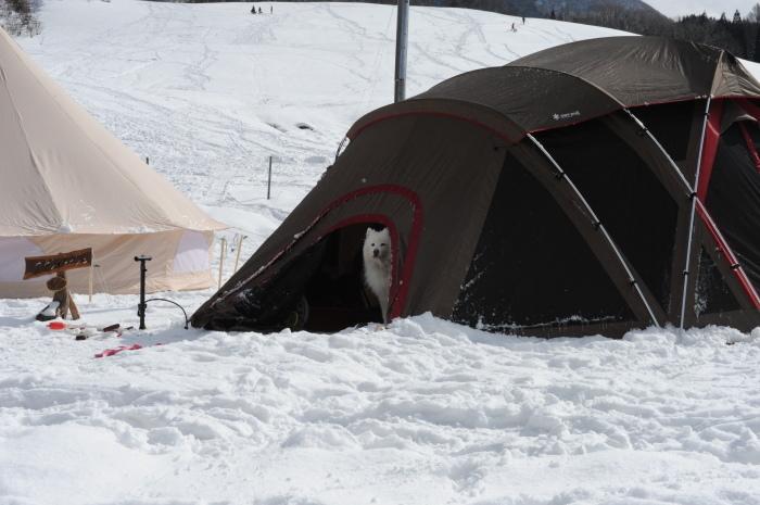 雪中キャンプ in一色の森キャンプ場 2_a0049296_18354532.jpg