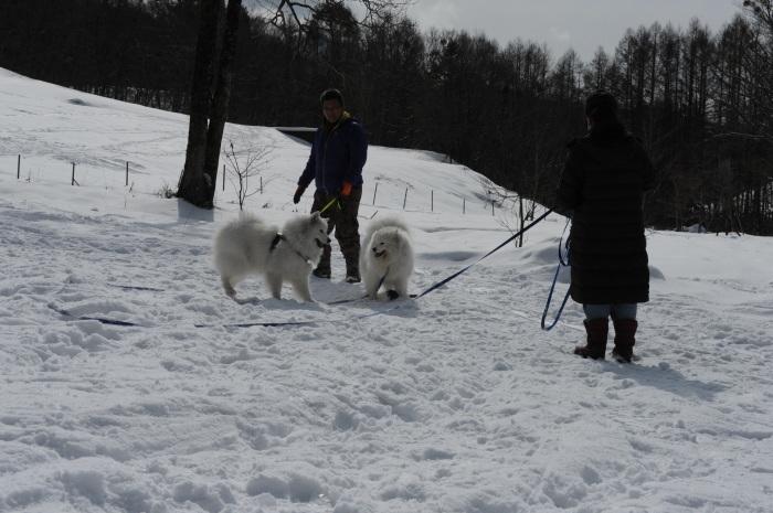 雪中キャンプ in一色の森キャンプ場 2_a0049296_18363436.jpg