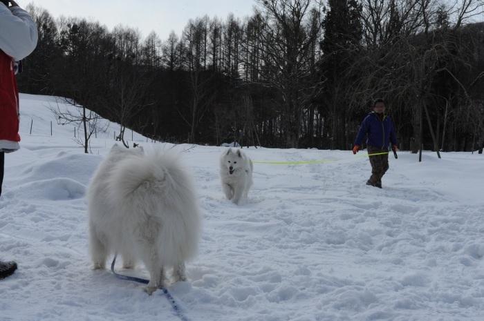 雪中キャンプ in一色の森キャンプ場 2_a0049296_18365004.jpg