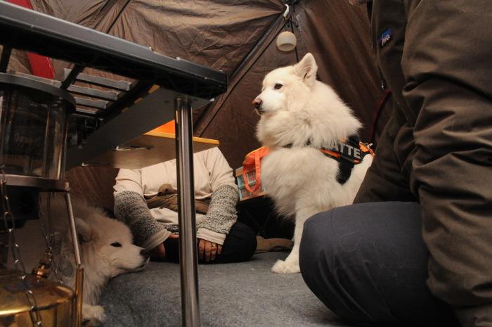 雪中キャンプ in一色の森キャンプ場 2_a0049296_18463207.jpg