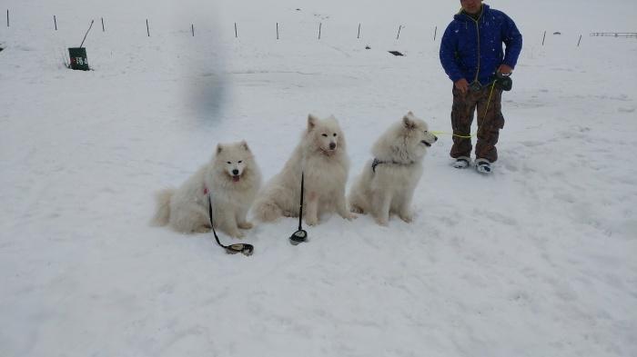 雪中キャンプ in一色の森キャンプ場 2_a0049296_18553220.jpg