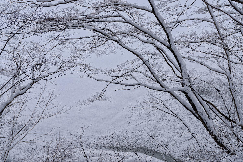 県道53号線 冬道散歩_a0041722_11443948.jpg