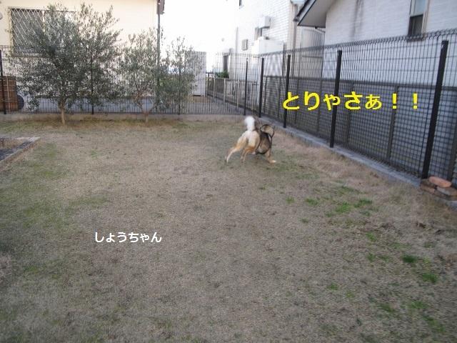 f0143123_11035036.jpg
