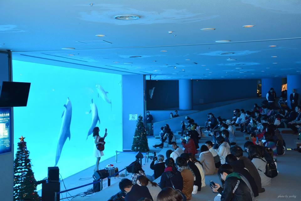 名古屋港水族館さんでの演奏、ありがとうございました。その2_f0373339_10360935.jpg