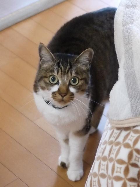 猫のお留守番 ハッピーくん編。_a0143140_18102046.jpg