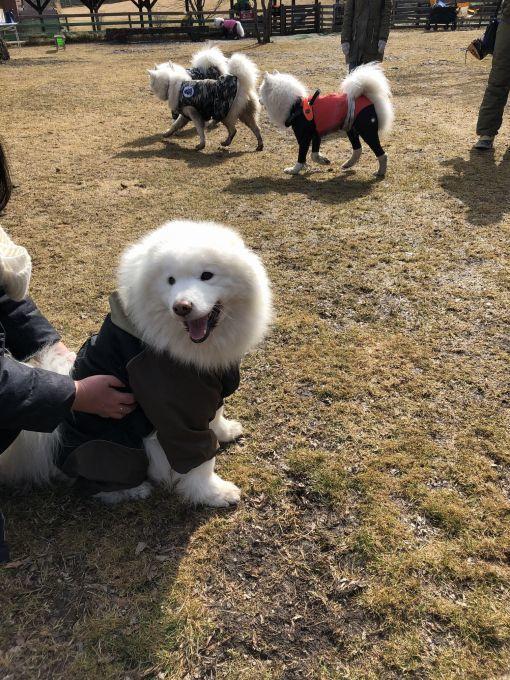 2019年ワフ 雪遊びオフ その1_f0128542_00330456.jpg