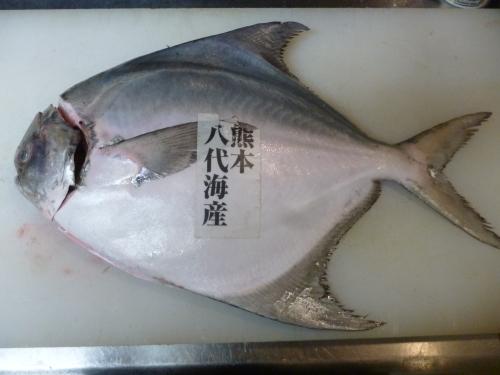今日の魚は…_e0252966_13310844.jpg