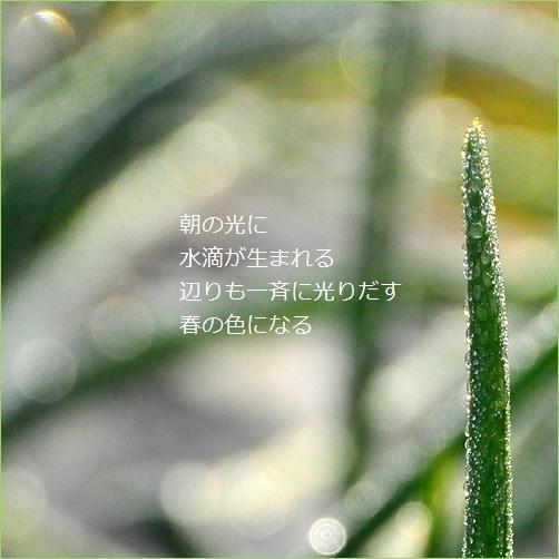 b0154475_20320450.jpg