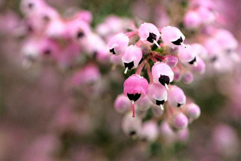 屋上庭園に咲く花_e0348392_18505447.jpg
