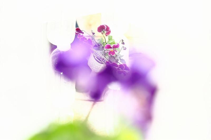 屋上庭園に咲く花_e0348392_18510009.jpg