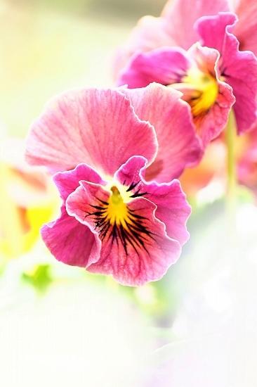 屋上庭園に咲く花_e0348392_18512297.jpg