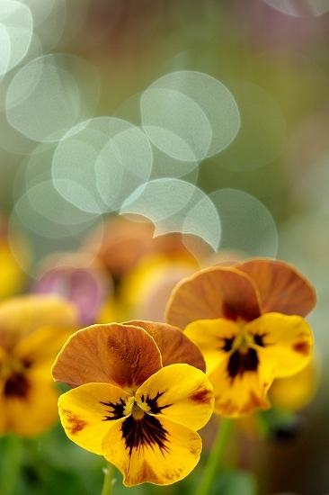 屋上庭園に咲く花_e0348392_18512906.jpg