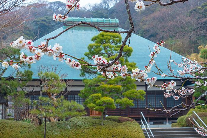 雪上がりの鎌倉散歩_b0145398_23311073.jpg