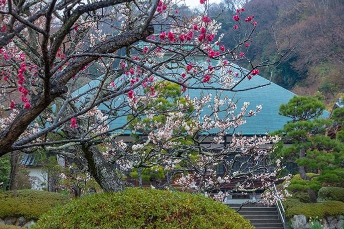 雪上がりの鎌倉散歩_b0145398_23362566.jpg
