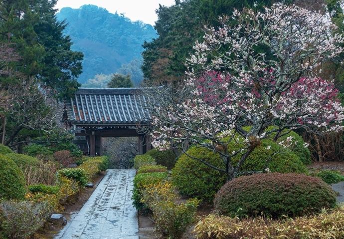 雪上がりの鎌倉散歩_b0145398_23363857.jpg