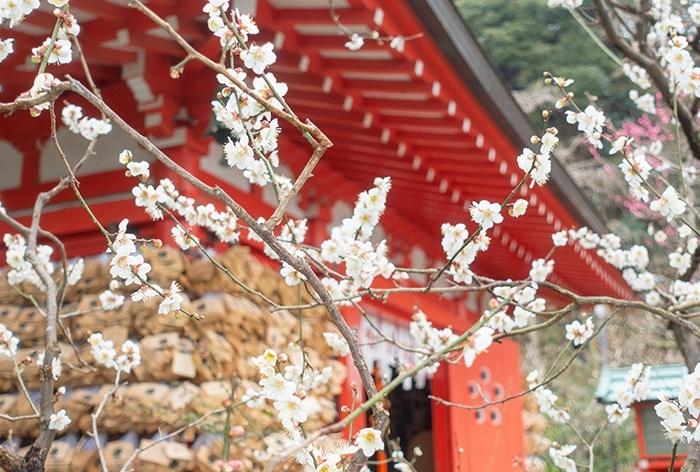 雪上がりの鎌倉散歩_b0145398_23454347.jpg