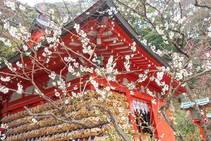 雪上がりの鎌倉散歩_b0145398_23455500.jpg