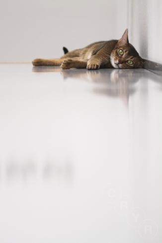 [猫的]待ち遠しい?_e0090124_23281253.jpg