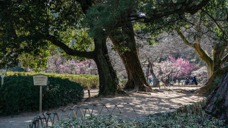 公園散歩 高松市 栗林公園 2_d0246136_18374028.jpg