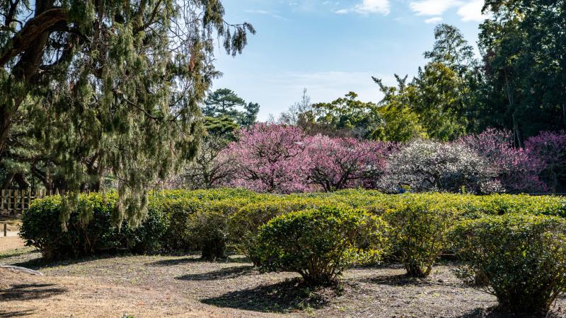 公園散歩 高松市 栗林公園 2_d0246136_18374603.jpg