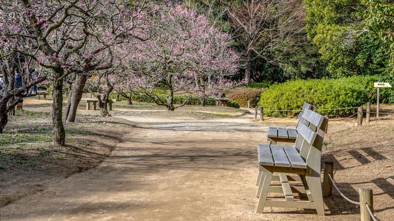 公園散歩 高松市 栗林公園 2_d0246136_18375164.jpg