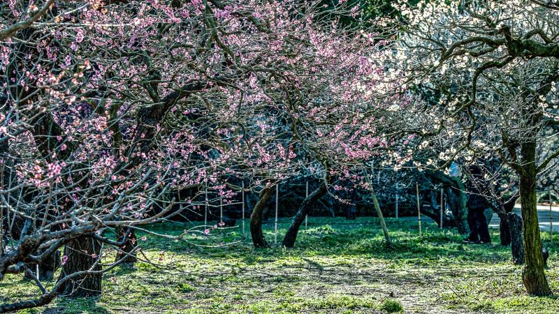 公園散歩 高松市 栗林公園 2_d0246136_18380495.jpg