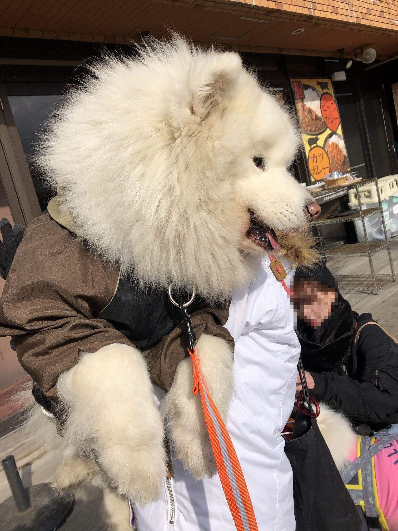 2019年ワフ 雪遊びオフ その2_f0128542_01582219.jpg