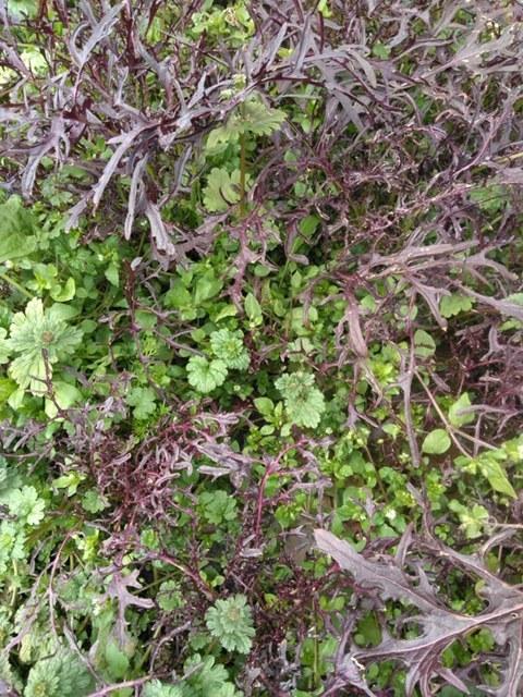 少し気温上がりました ほっとしています蚕豆の花咲いてきました_c0222448_18171013.jpg