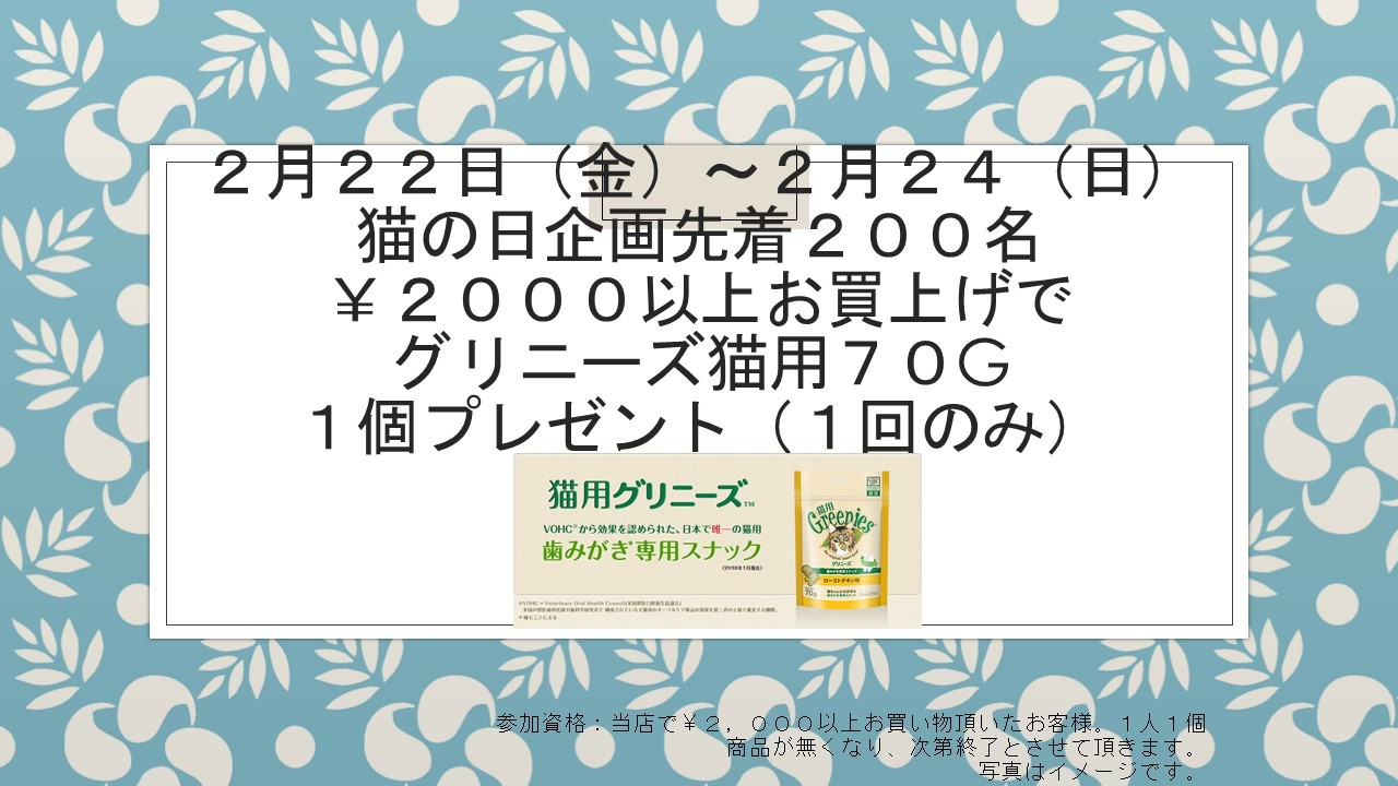 190216 猫の日セール_e0181866_09403899.jpg