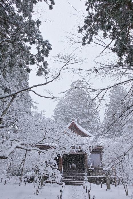 京都 大原雪景色 2019_f0021869_00540700.jpg