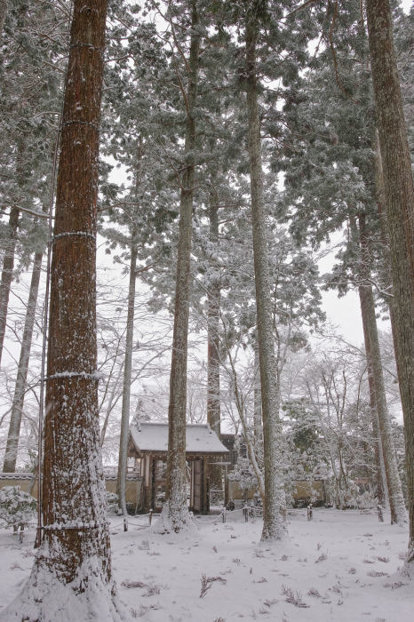 京都 大原雪景色 2019_f0021869_00540856.jpg