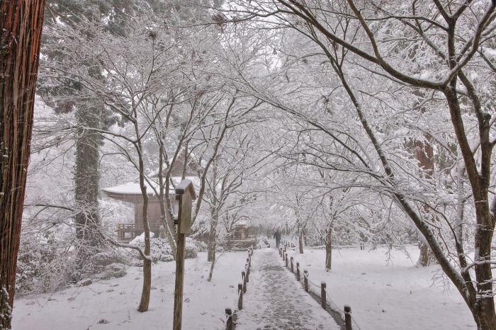 京都 大原雪景色 2019_f0021869_00540987.jpg