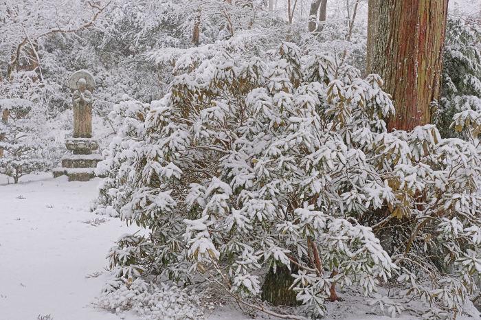 京都 大原雪景色 2019_f0021869_00541003.jpg