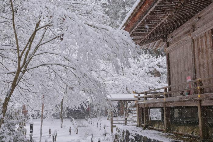京都 大原雪景色 2019_f0021869_00541105.jpg