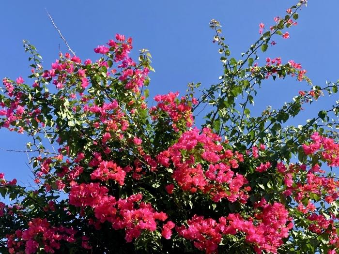 花は、咲くように咲いている。_a0142373_12060700.jpeg