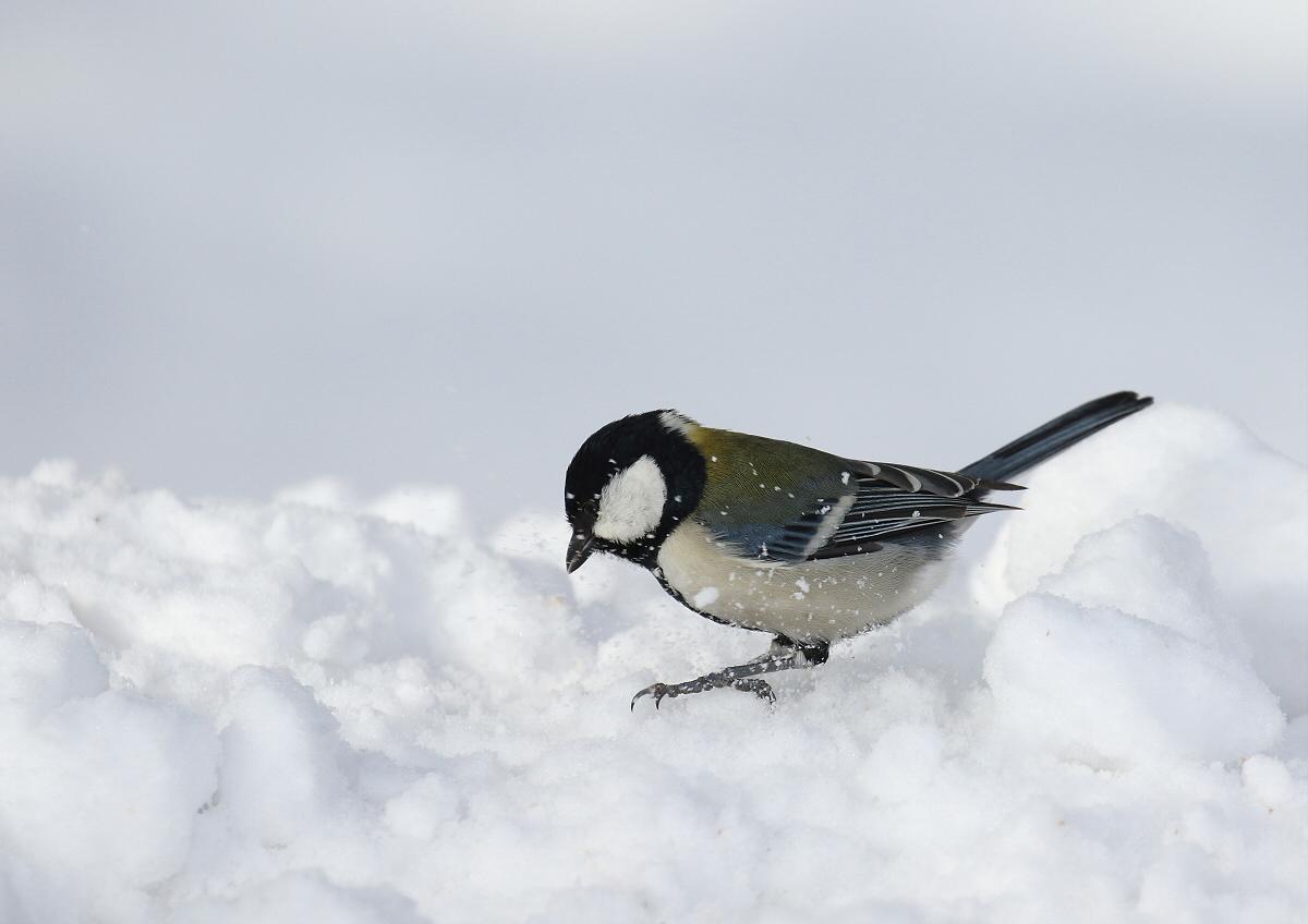 真っ白な雪の上で・・・_c0113597_14301402.jpg