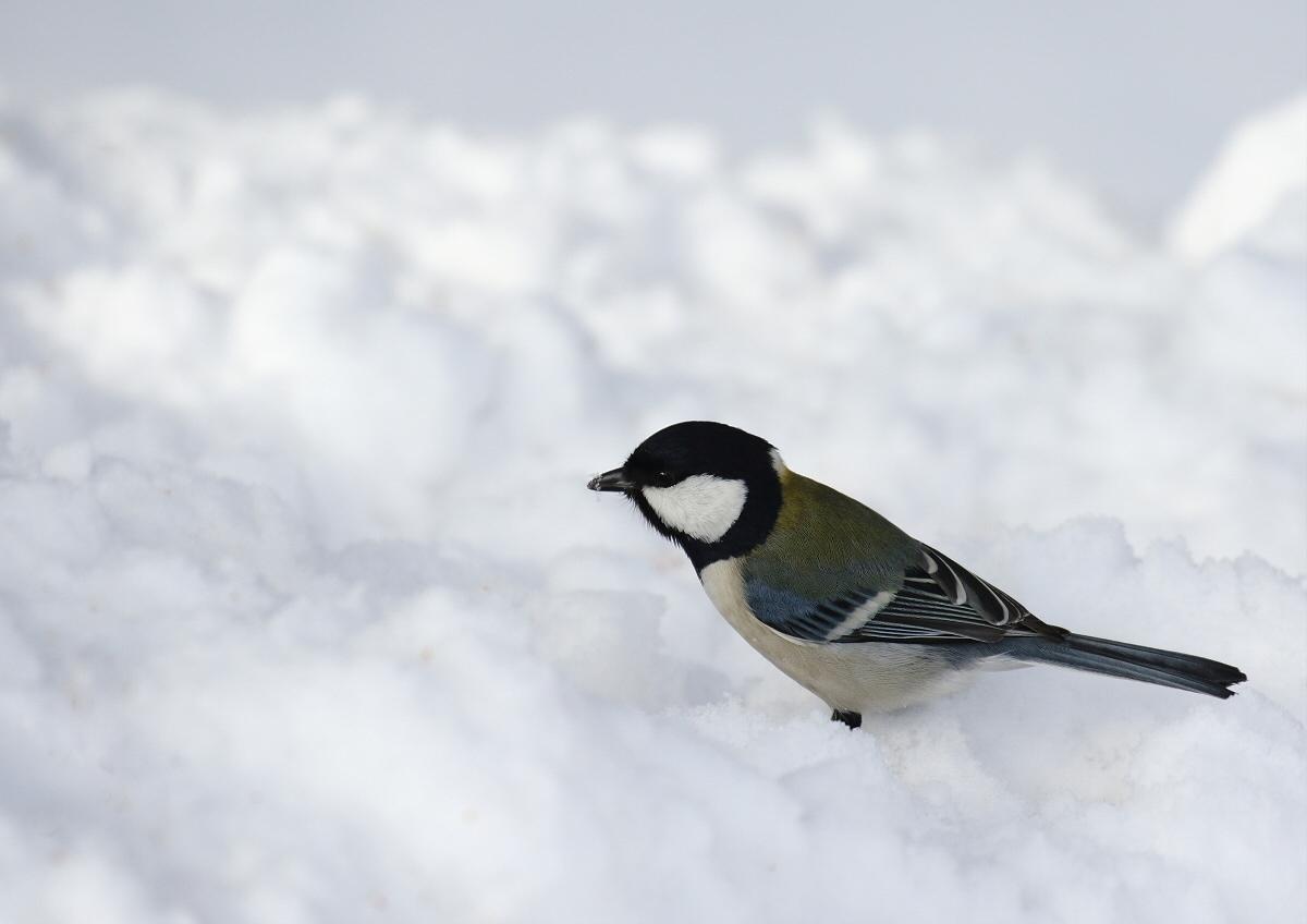 真っ白な雪の上で・・・_c0113597_14304373.jpg