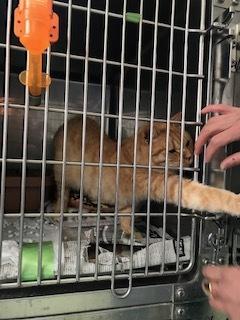 【猫・移動先募集】センター(支所)収容(2/16訪問)_f0242002_19551523.jpg