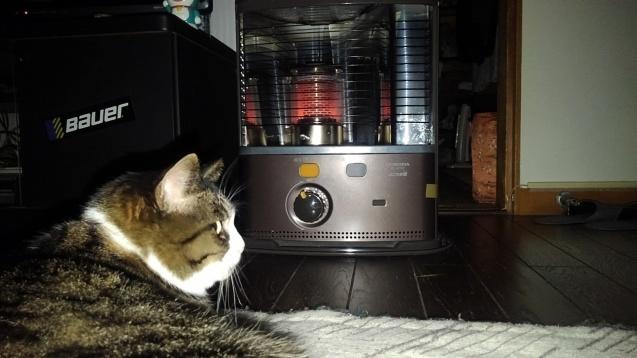 【猫】オネムなんです_f0141609_20521692.jpg