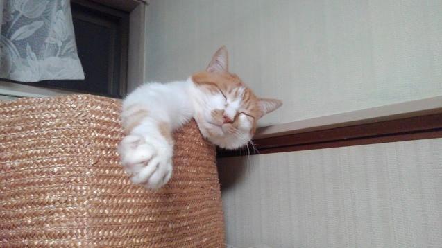 【猫】オネムなんです_f0141609_20521844.jpg