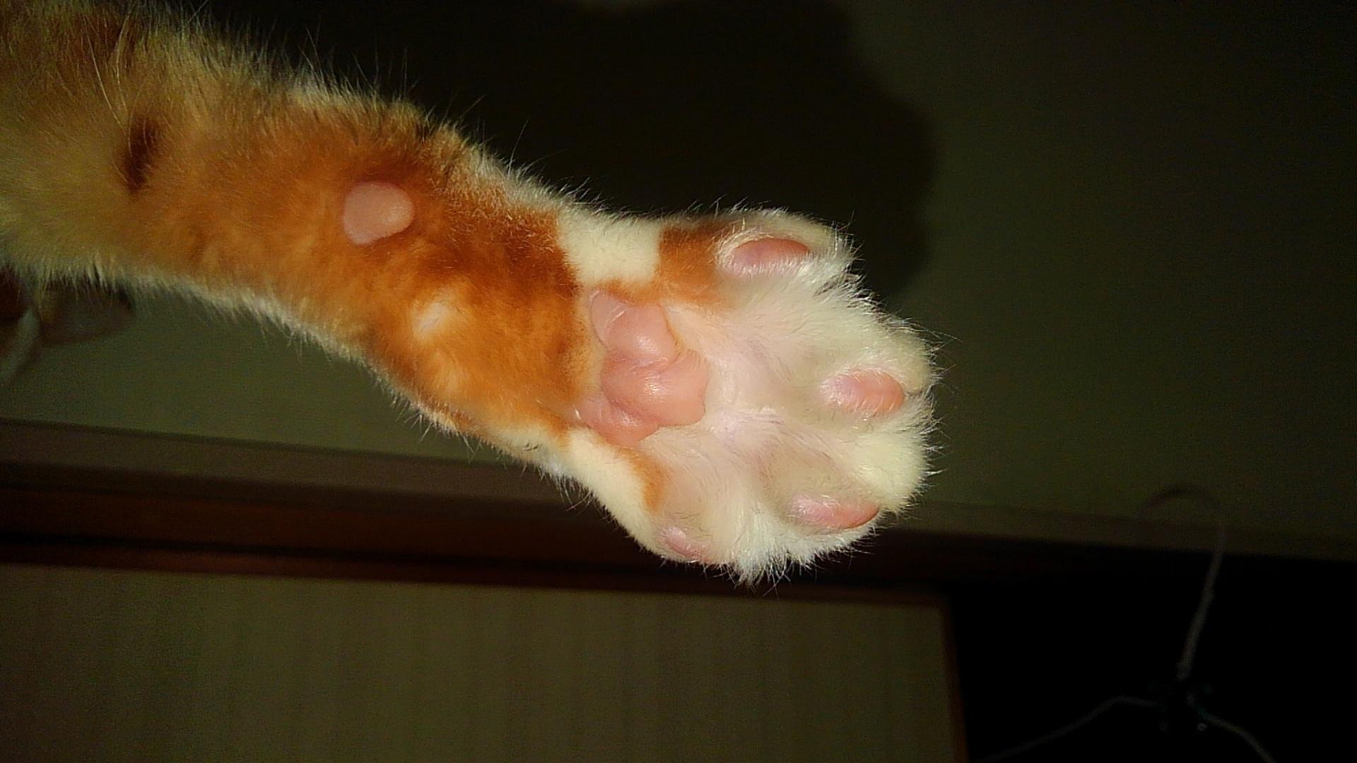 【猫】オネムなんです_f0141609_20522082.jpg