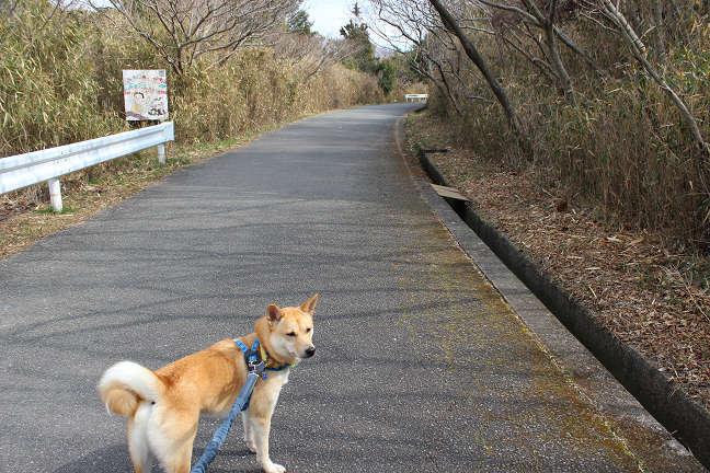 先週と同じ散歩コース_e0371017_23373686.jpg