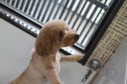 2月16日ご来店のワンちゃんです!!_b0130018_09035280.jpg