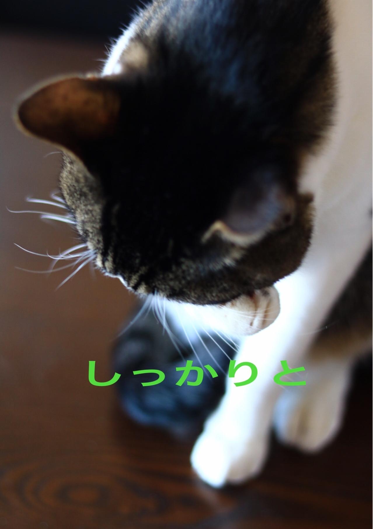 c0366722_20122196.jpeg