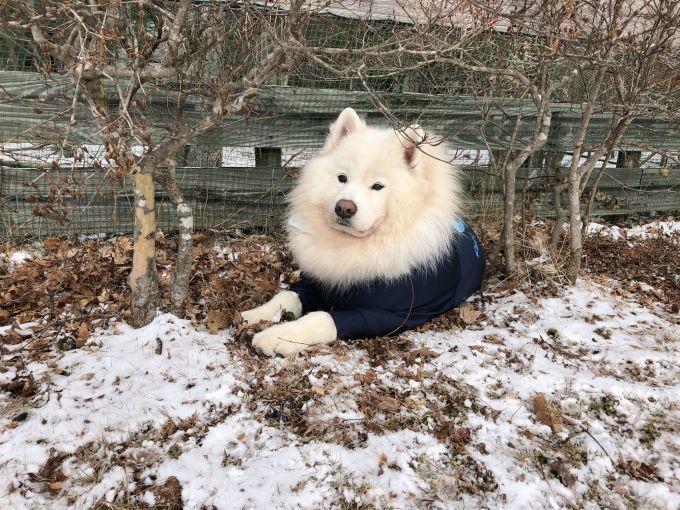 2019年ワフ 雪遊びオフ その3_f0128542_02513225.jpg