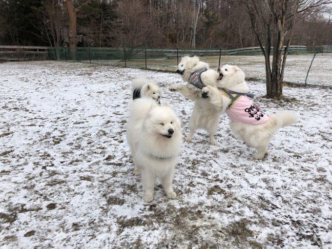 2019年ワフ 雪遊びオフ その3_f0128542_02522524.jpg