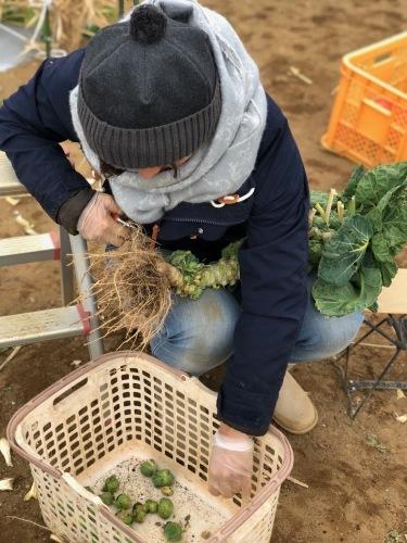 今朝は 芽キャベツ 人参 蕪 ほうれん草 カーヴォロネーロ ブロッコリーの収穫_c0222448_11521483.jpg